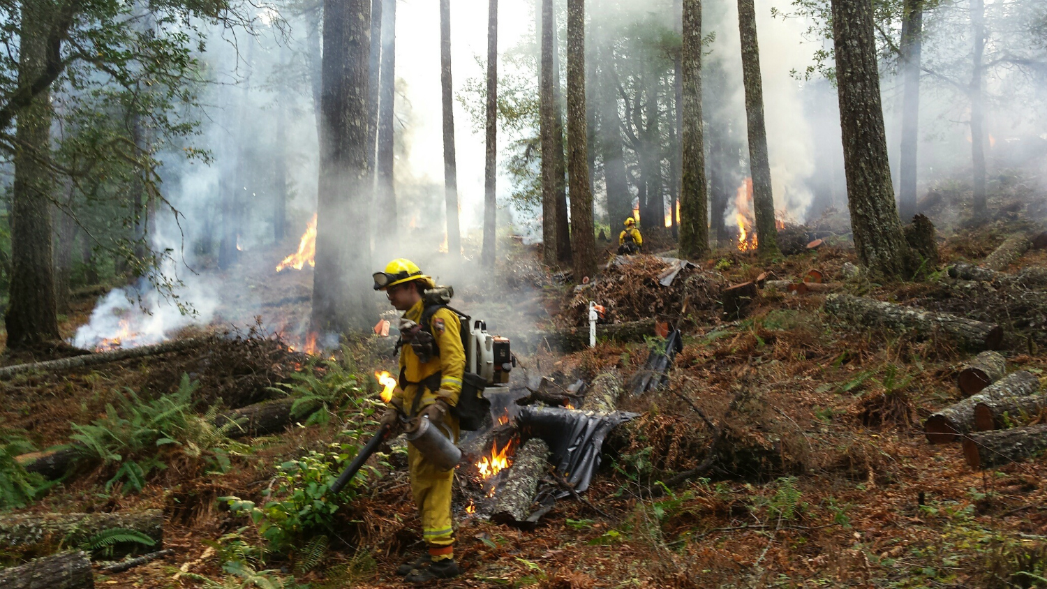 Wildfire Resilience in California