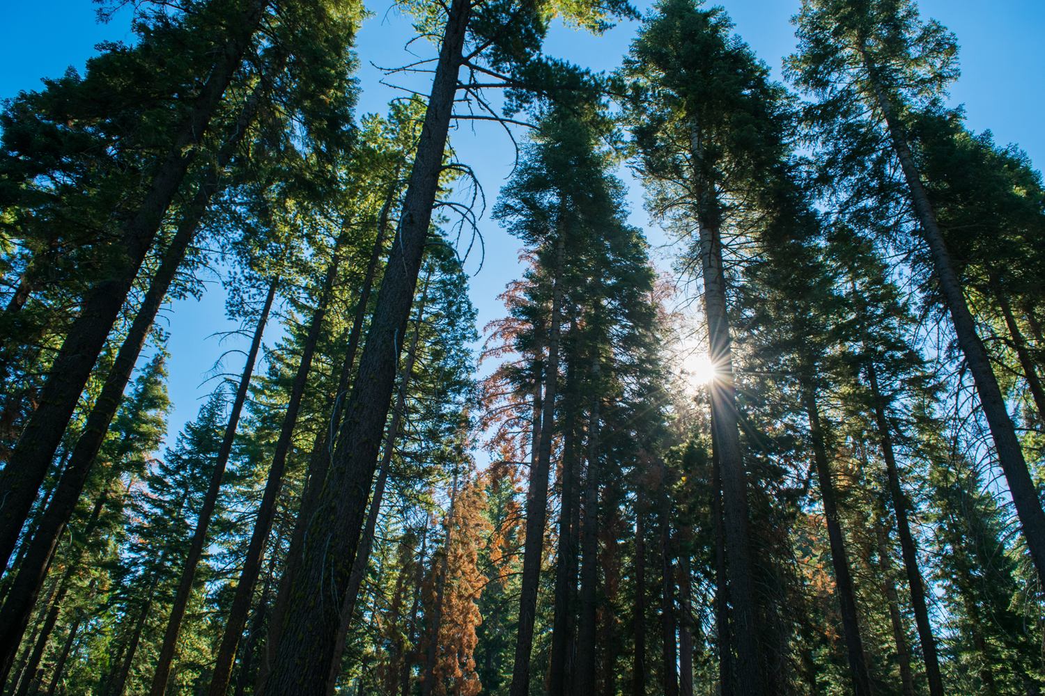 Building Climate Resilience Through Private Investment in Forest Health